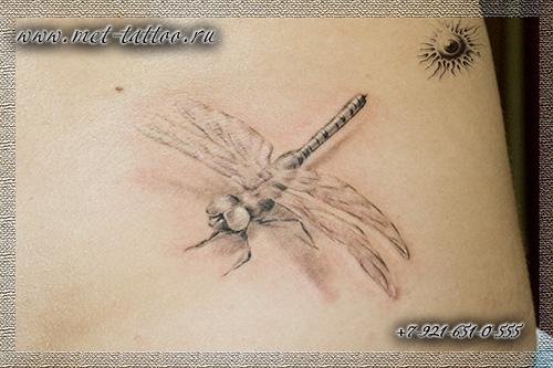 Татуировка - стрекоза. Женская черно-белая татуировка на пояснице. Тату в СПБ.